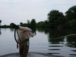 a person walking through shallow water carrying a net on their shoulder