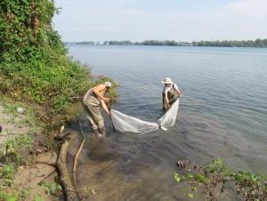 Two people wearing waders pulling a net through shallow water by the shore