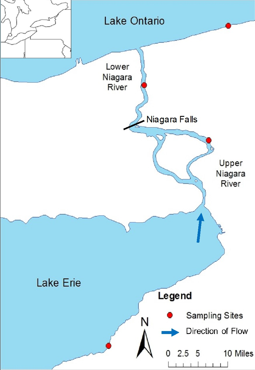map of the Niagara River region with sampling sites and direction of flow delineated. An inset shows the larger region.