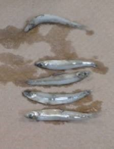 fiver silver fish on a paper towel